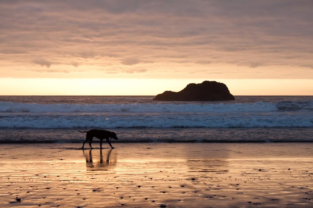 Django on an Oregon beach