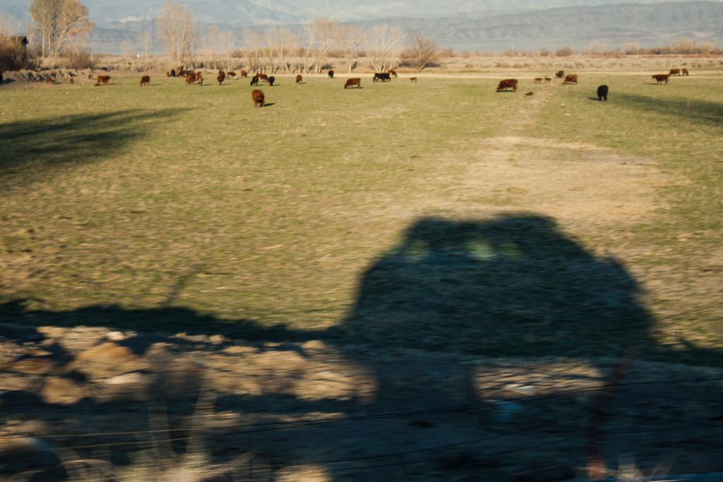 Chimera shadow.