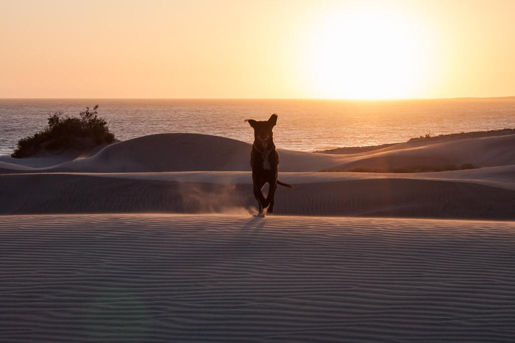 Hobie loved the dunes!