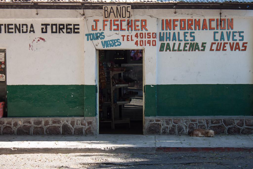 Tienda y perrito en San Ignacio.