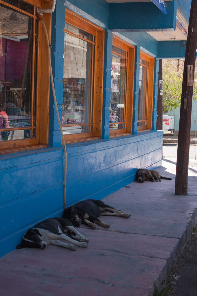 Perros sleeping in the shade in Santa Rosalia.