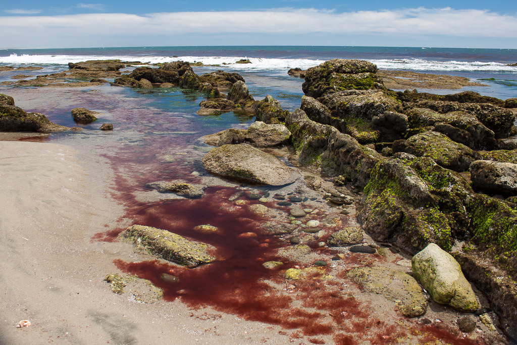 Red tide pool.