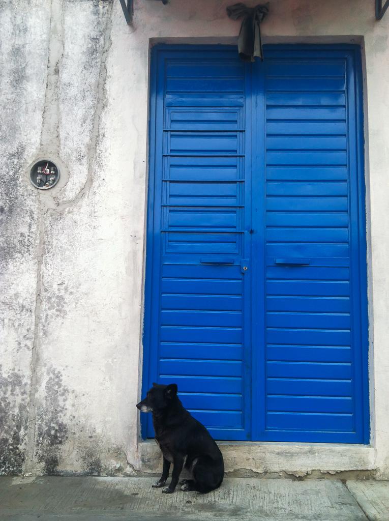 Stray dog posing against a blue door.
