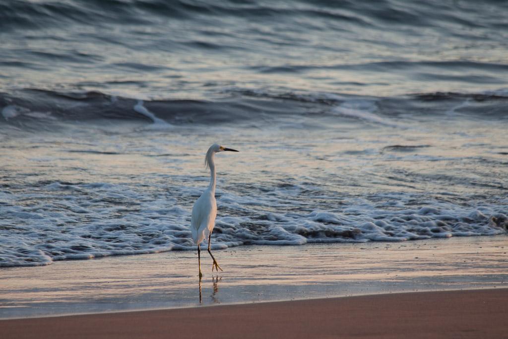Egret on the beach.