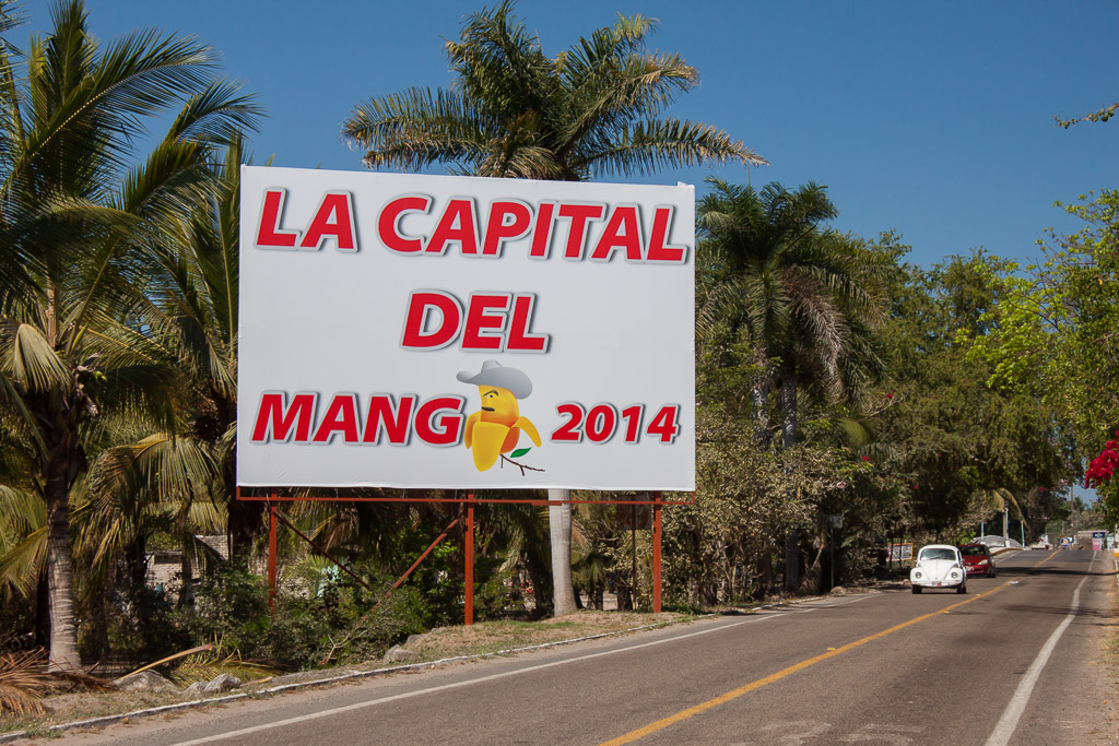 San Blas and the surrounding towns are very proud to be the mango capital of 2014. These signs were pasted everywhere.