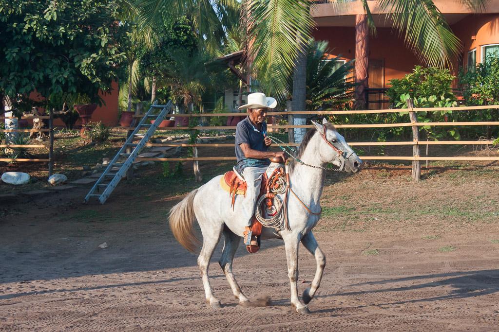 Dancing horse at La Saladita.