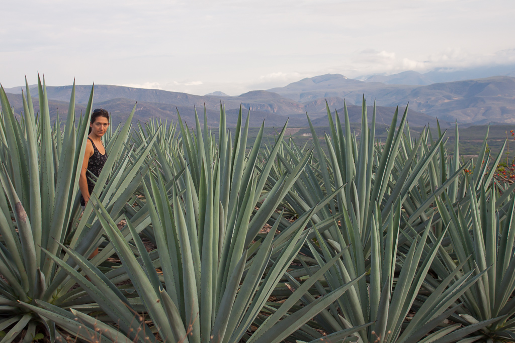 Emily in the agave.