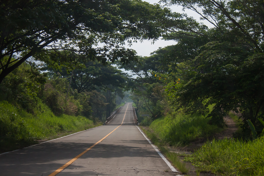 Driving through the jungle.