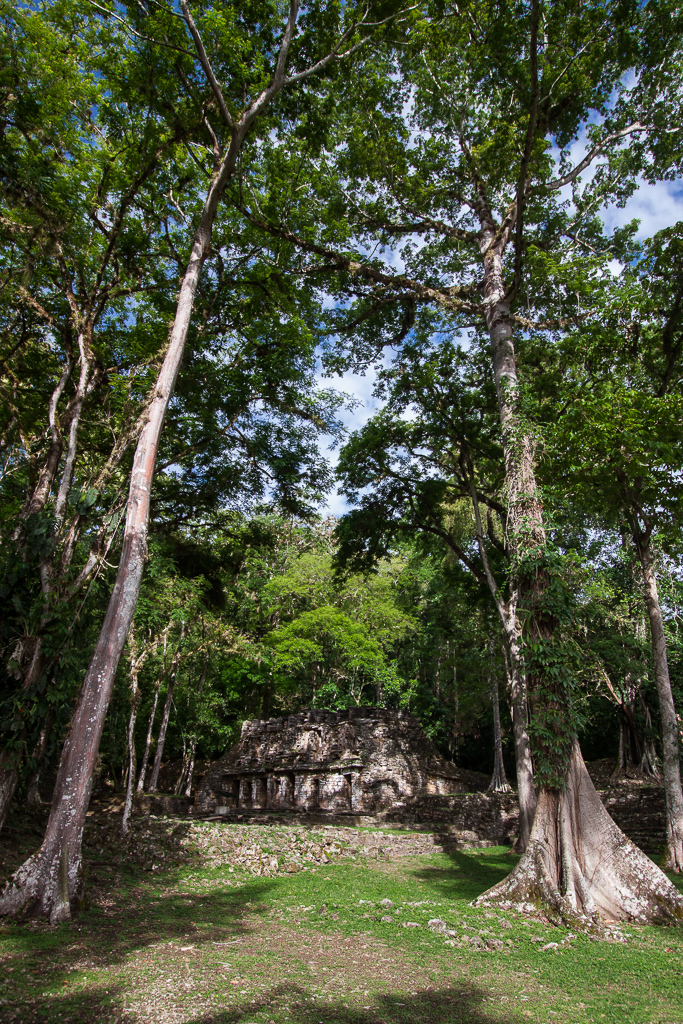 Ruins in the massive trees at Yaxchilan.