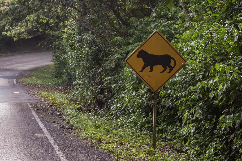 Watch out for jaguars along the road into Tikal.