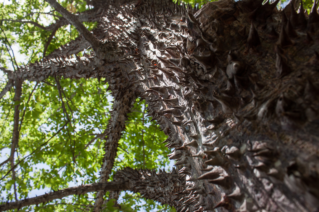 Tree armor.