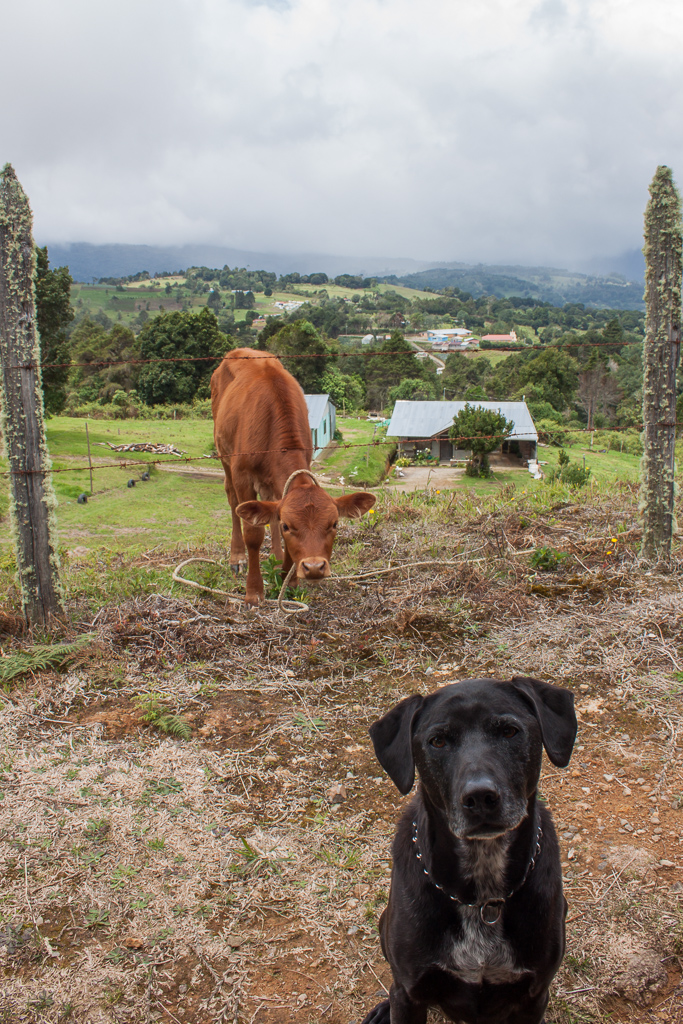 """Calf: """"Oh please please be my friend, come play with me!"""" Hobie: """"What the hell, it's still staring at me. Maybe if I don't look at it then it will go away."""""""
