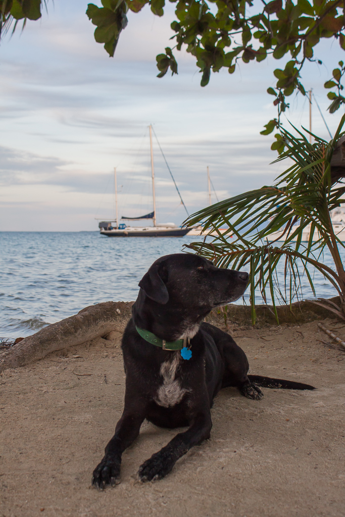 Hobie loved every chance to go ashore.
