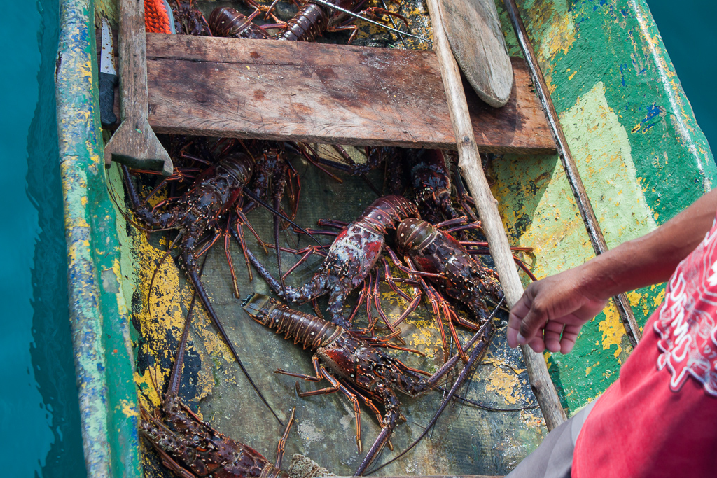 Our lobster dinner in the Kuna canoe.