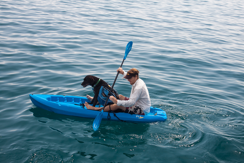 Hobie didn't mind being lifted onto a kayak and paddled to the closest island. He knew it meant that he would soon have dry land to run around and do his business on.