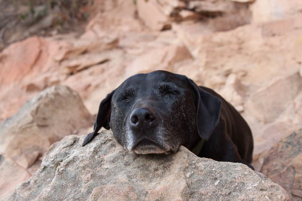 This is what Hobie thinks of us climbing all day.