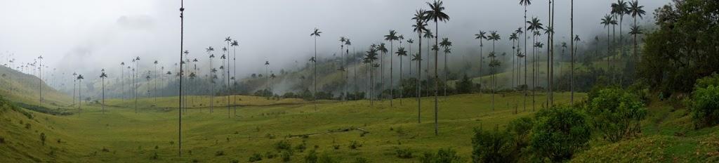 Valle de Cocora (photo by Elizabeth Frank)