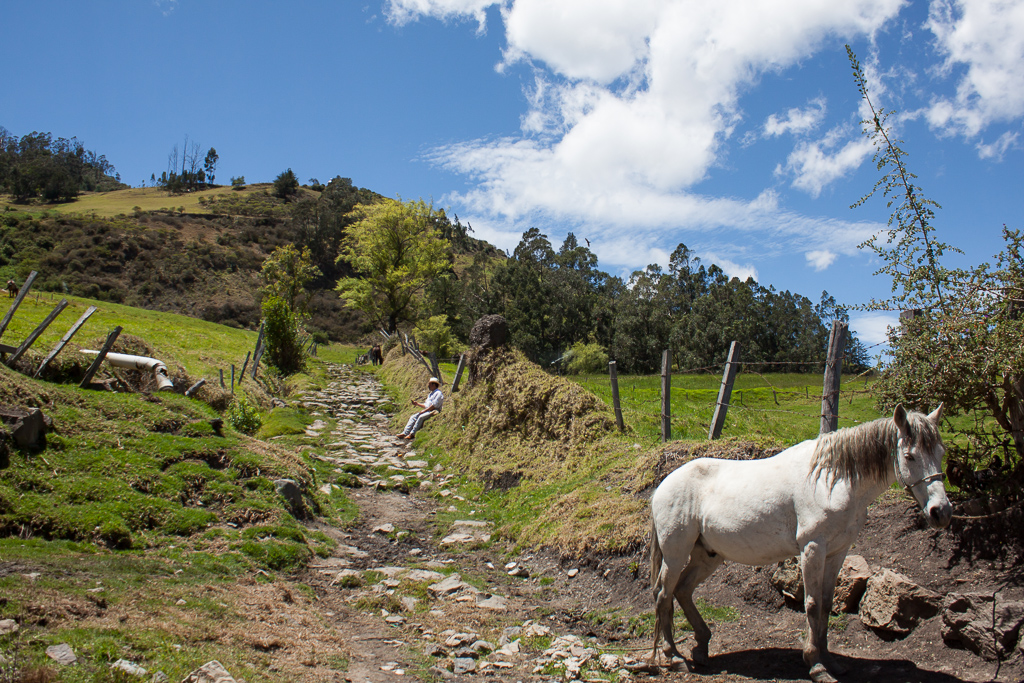 Our favorite path on the outskirts of El Cocuy, lined with the daily cows, horses, and caballeros.