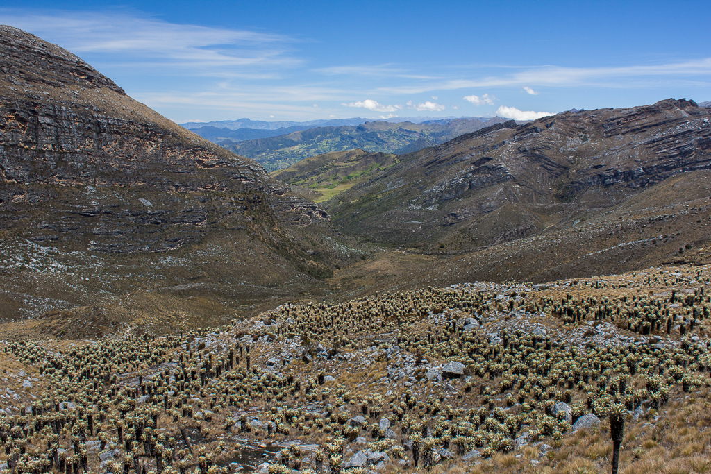 Looking back from the ridge at the Valle de los Frailejones and beyond.