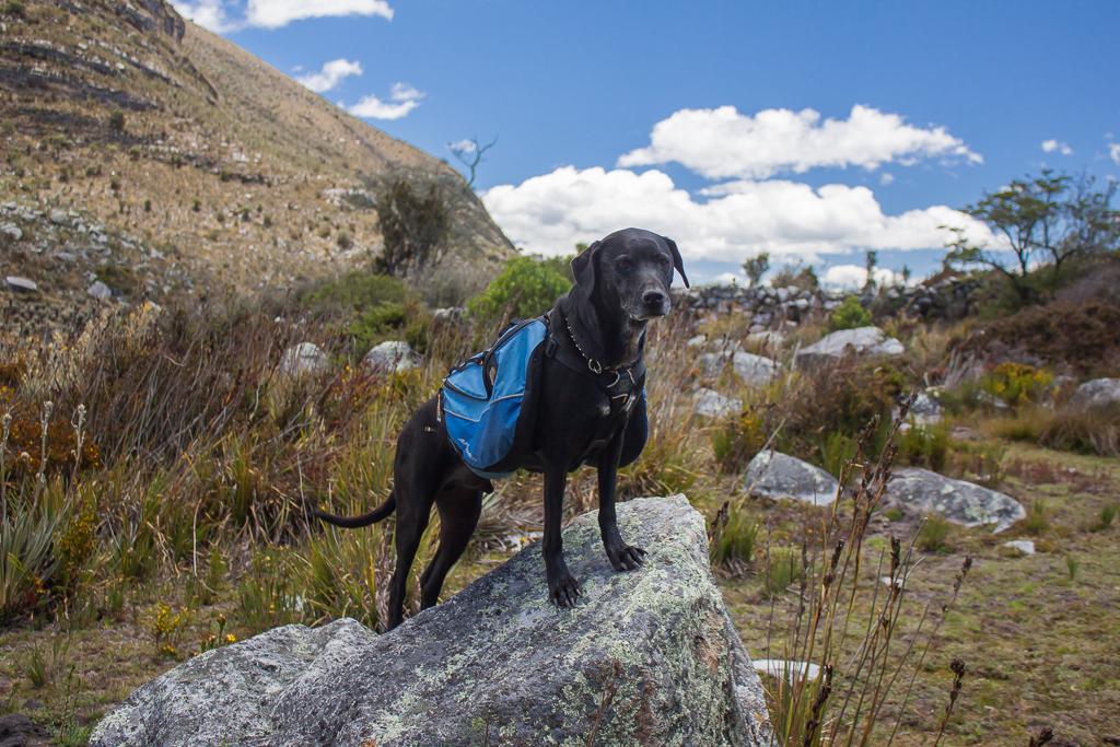 Hobie posing in his pack.