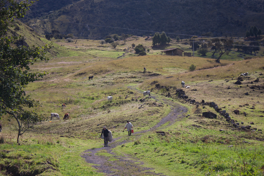 Bringing milk jugs and sacks of wool and potatoes down to be loaded when the lechero returns from the top of the hill.