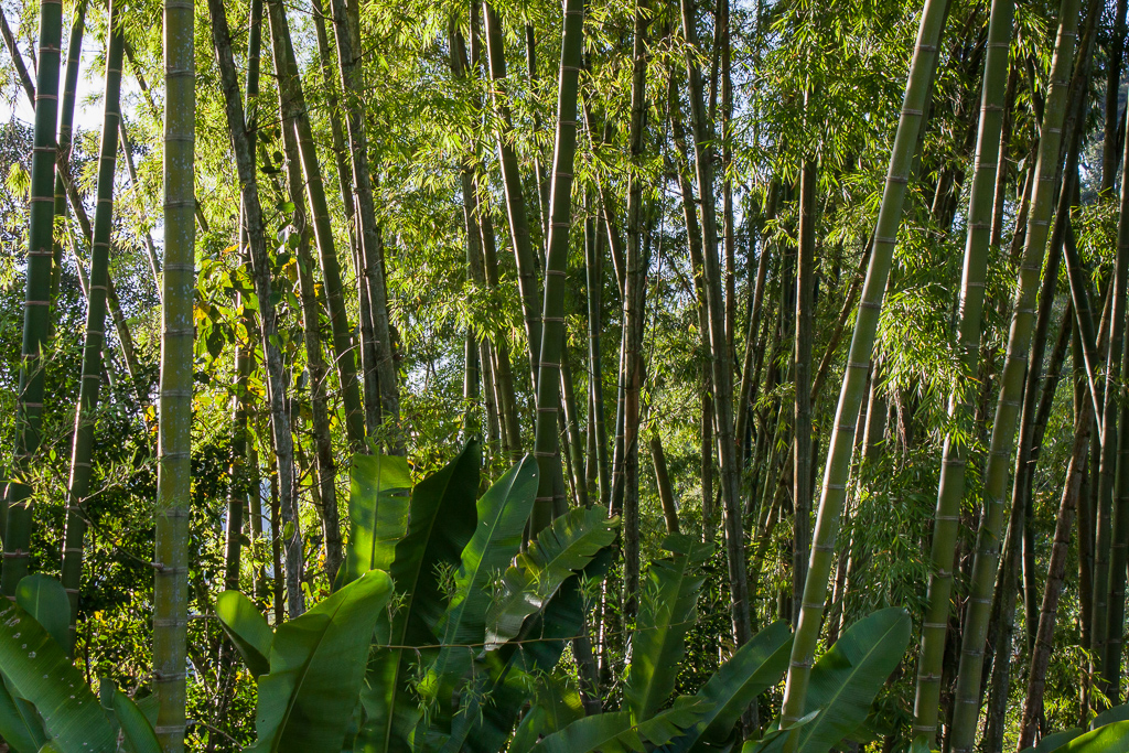Tall stands of bamboo and banana plants offered welcome shade.