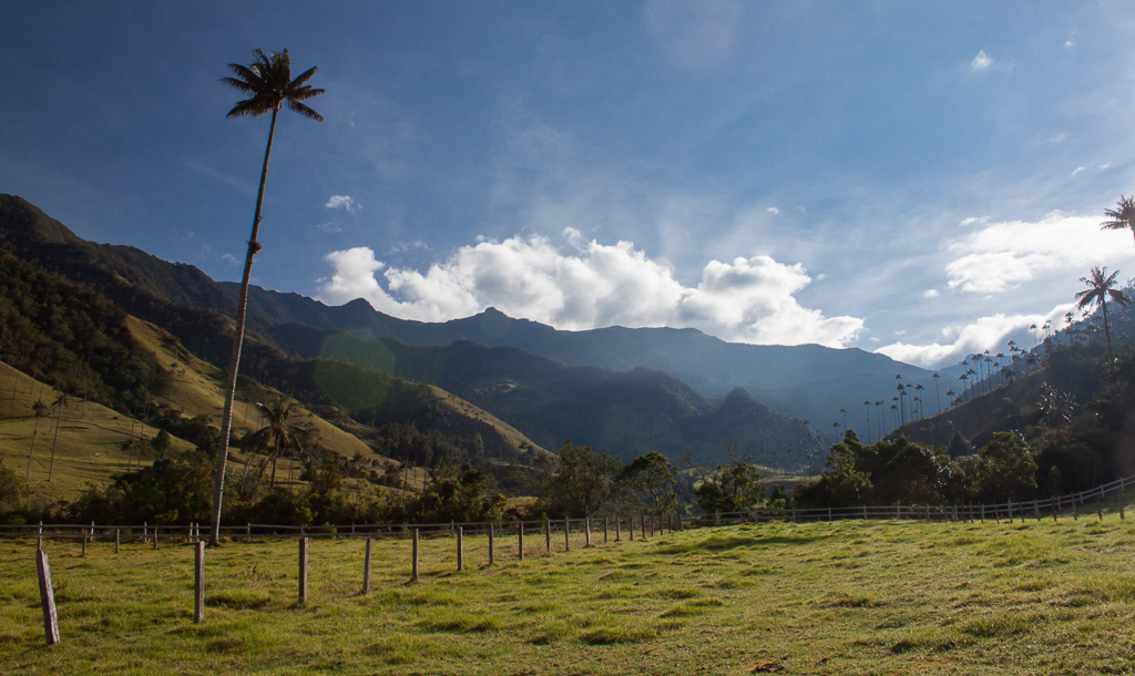 The bright green hills and sky-high wax palms make the Valle de Cocora truly a magnificent sight to behold.