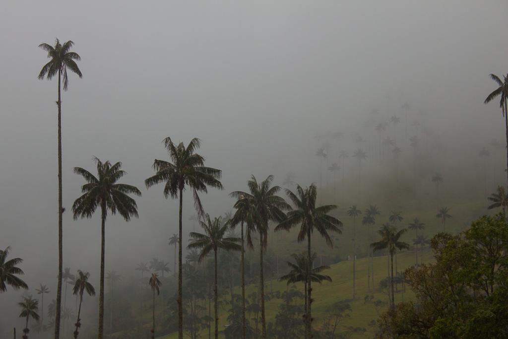 Valle de Cocora in the mist.