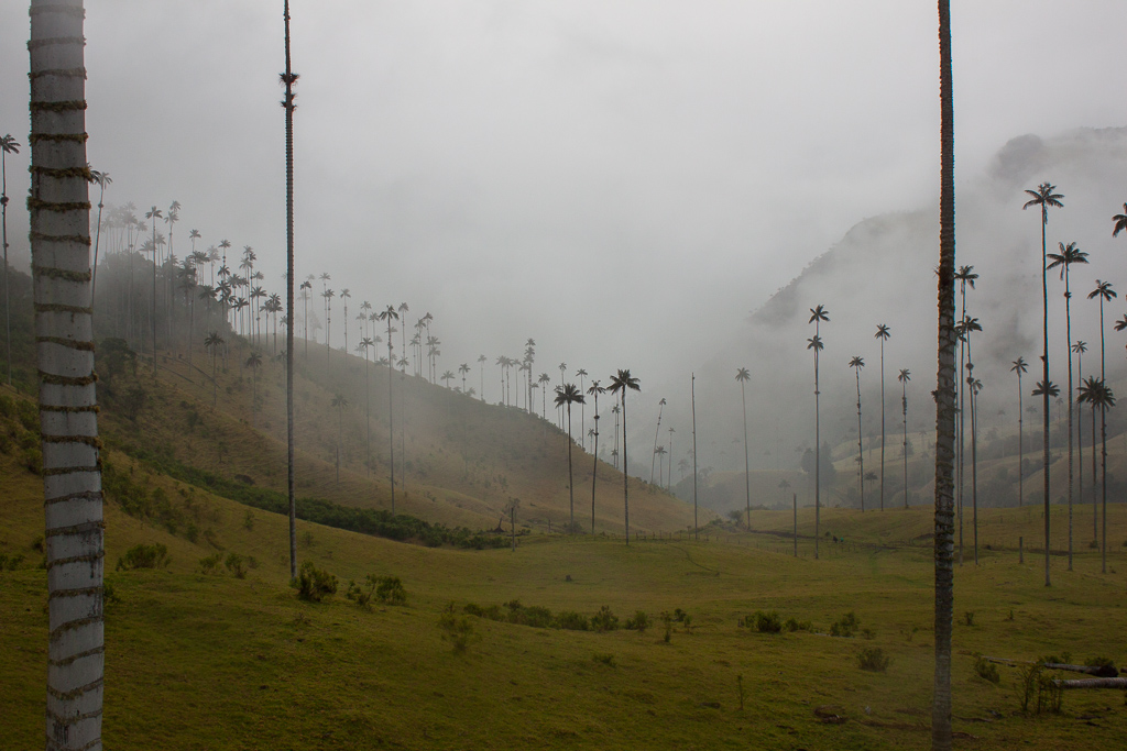 Tall wax palms in lush green hills...not even a rainy day could detract from the incredible scenery of Valle de Cocora.