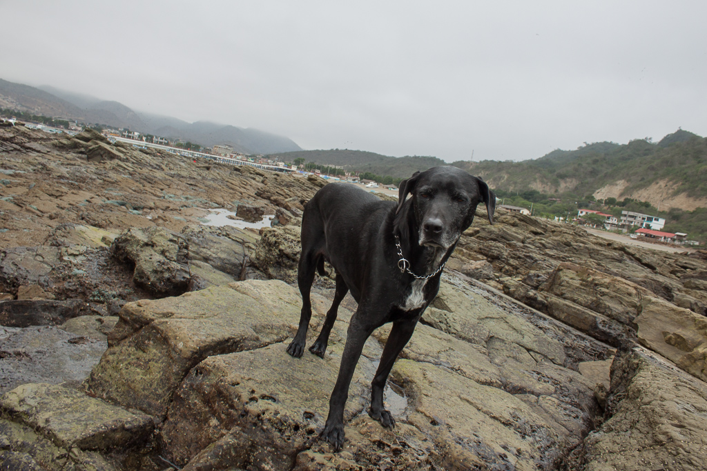 Hobie striking a pose while out sniffing tide pools.