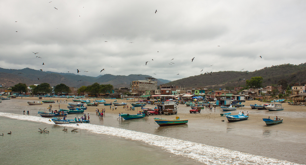 The lively fish market of Puerto Lopez, replete with pelicans, gulls, boobies, and frigates galore.