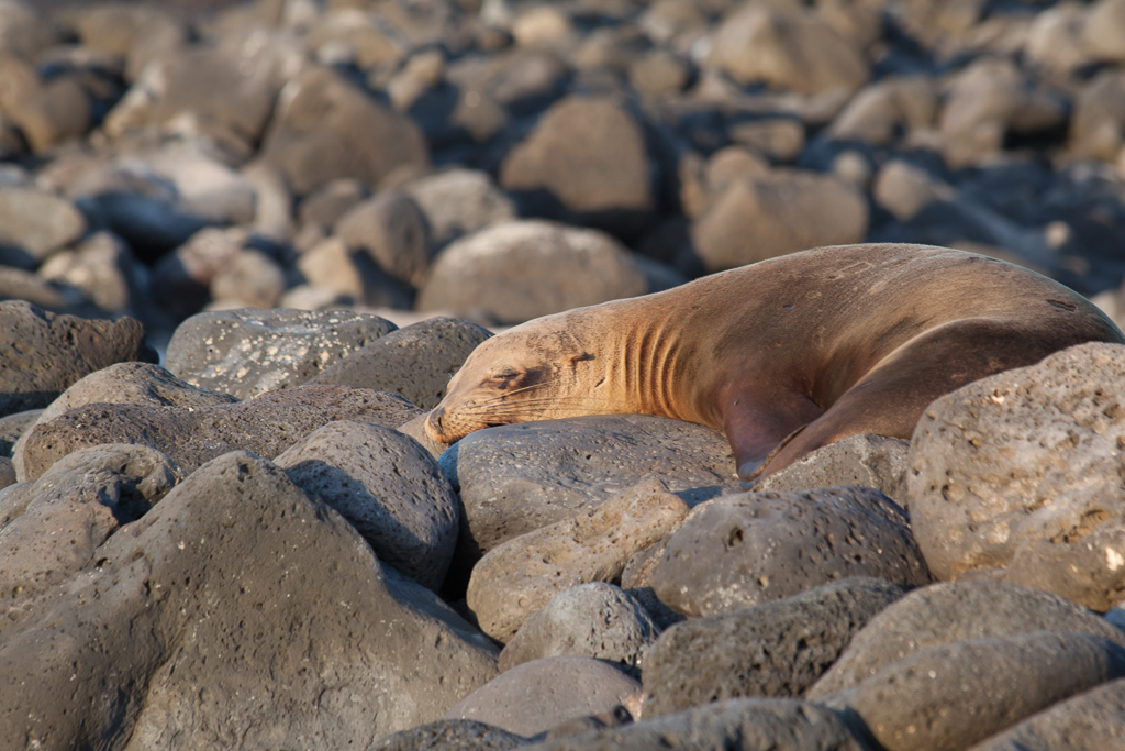 Happy sea lion catching some late afternoon rays.
