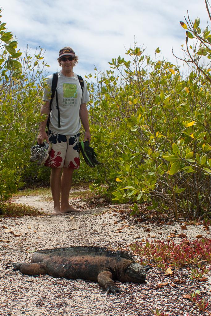 Tim versus the lazy marine iguana, Tortuga Bay, Santa Cruz Island.