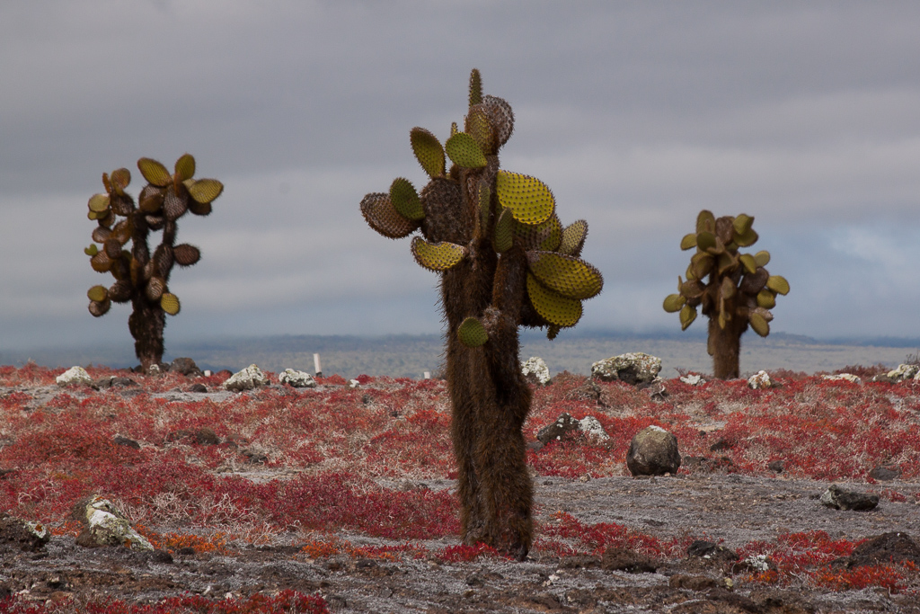 Colors of the Galápagos.