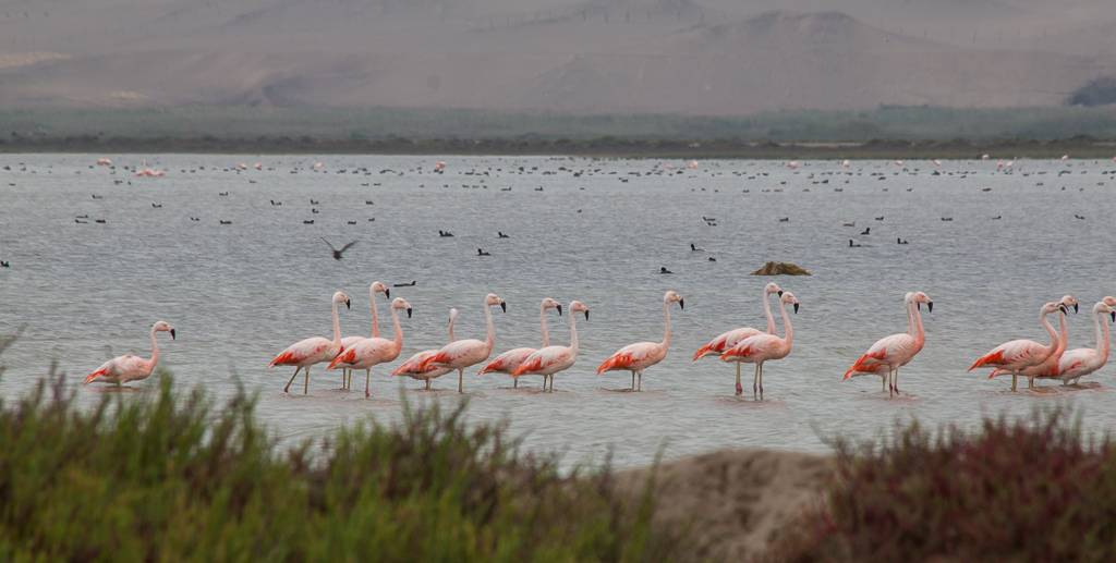 Our first flamingo sighting, on Tim's mom's birthday.