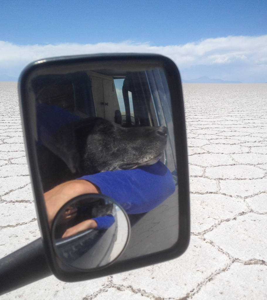 Hobie enjoying the view of the Salar de Uyuni.