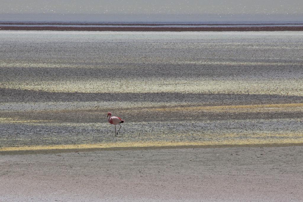 Walking flamingo.