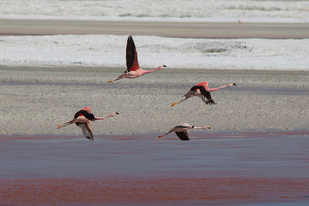 Flying flamingos.