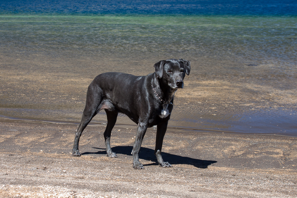 Hobie posing on the shore of the volcanic crater lake.
