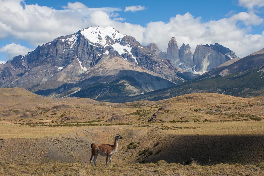 Guanaco posing in Torres del Paine.