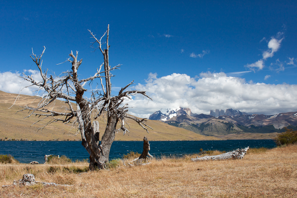 Tree skeleton, Torres del Paine.