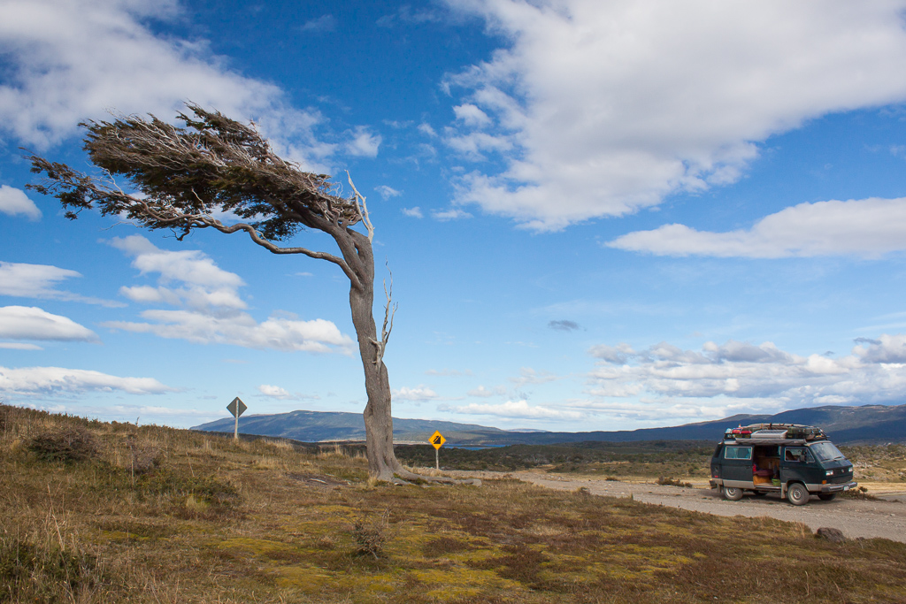 This is the effect of the regular howling gales in Tierra del Fuego and southern Patagonia.