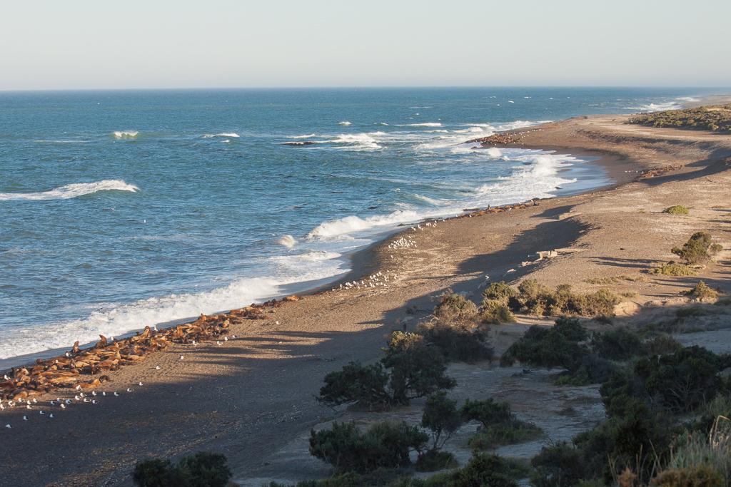 Sea lion colony, Peninsula Valdes.