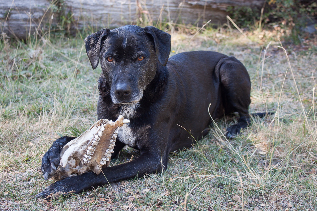 What? I took a swim and found a skull to chew on. Don't bother me.