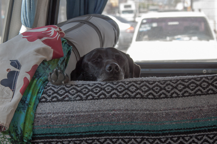 Hobie loved van life.